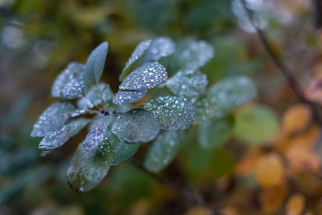 Naturfotografie - richtig fotografieren lernen