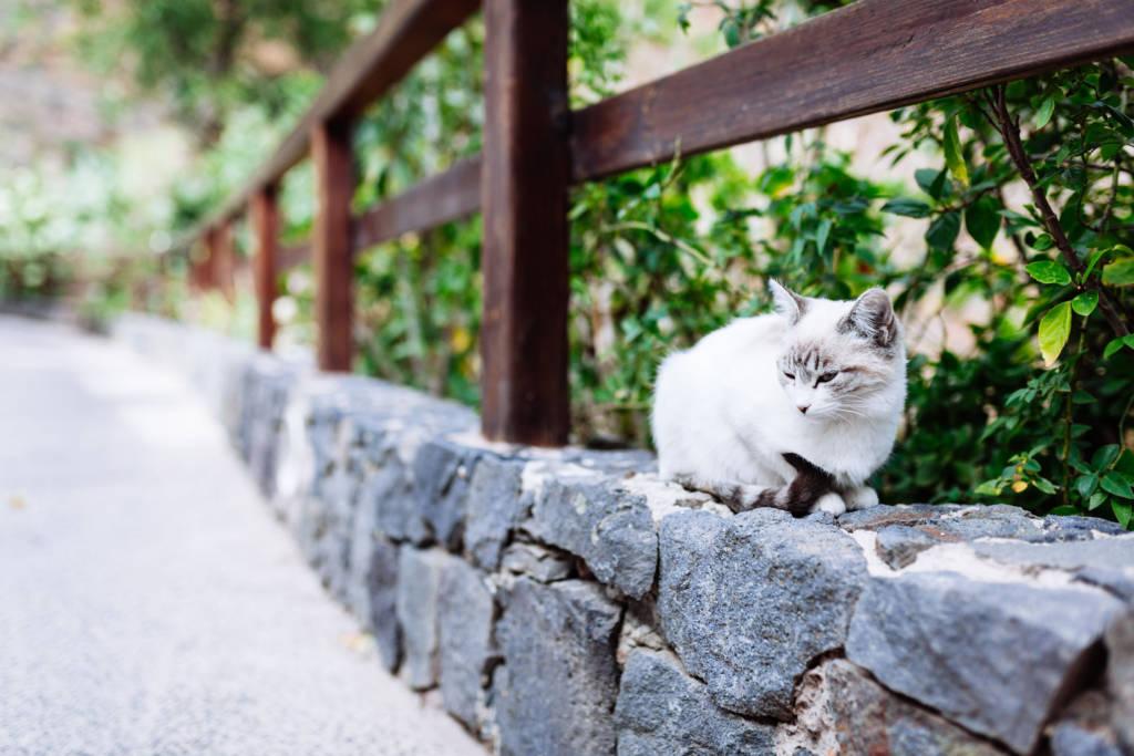 Gran Canaria 2017 - Katze im Bergdorf Guayadeque
