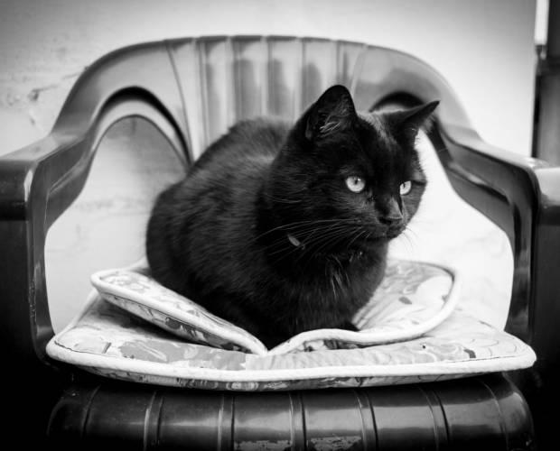 Schwarze Katze - manuell fokussiert mit Fujinon-W 1:2.8/35 an Canon EOS 5D Mark II