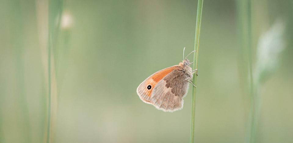 Makroaufnahme Schmetterling - richtig-fotografiert.de Blog