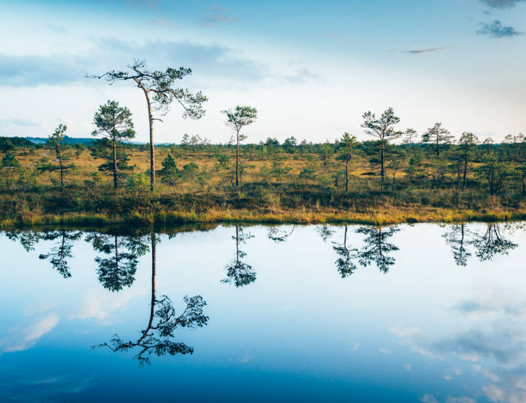 Landschaftsfotografie - Spiegelungen in einem Teich im Moor